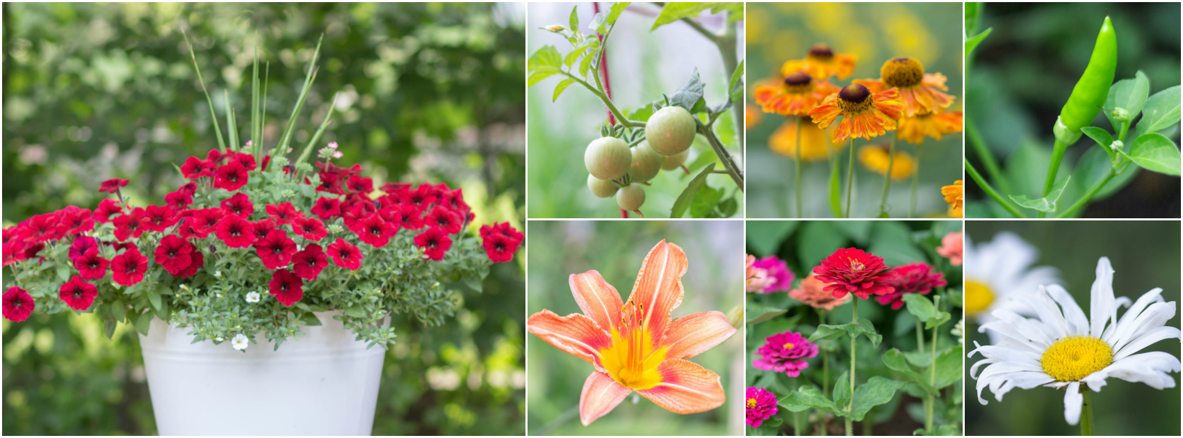 July Garden Tour | angiethefreckledrose.com