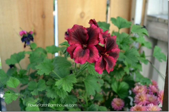 Overwintering Your Favorite Plants - Flower Patch Farmhouse