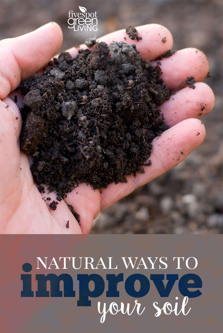Natural Ways To Improve Your Soil | Fivespot Green Living