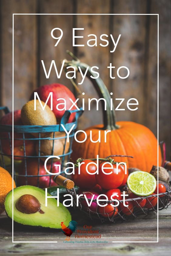 9 Ways to Maximize Your Garden Harvest | Our Provident Homestead