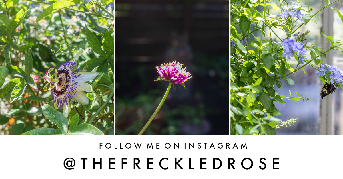 follow_on_instagram_thefreckledrose