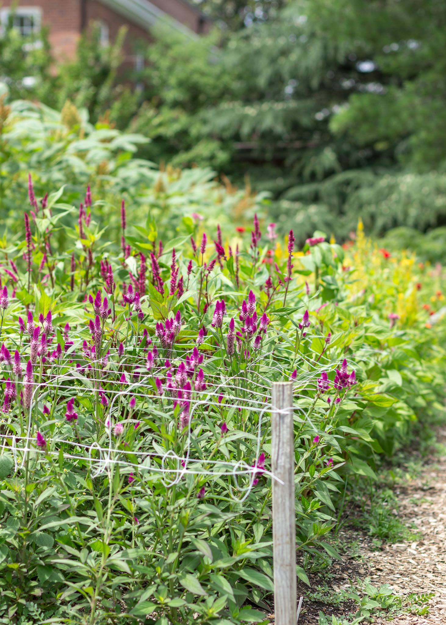The Gardens of Hillwood Estate | angiethefreckledrose.com