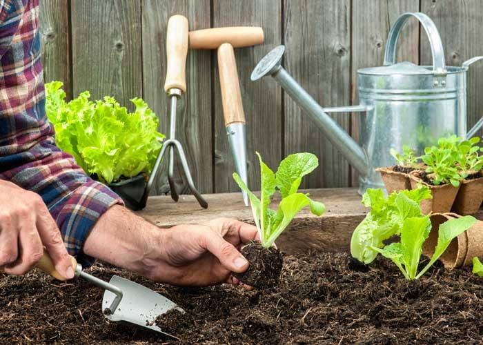 Garden Planner: Spring Planting Guide | Fivespot Green Living